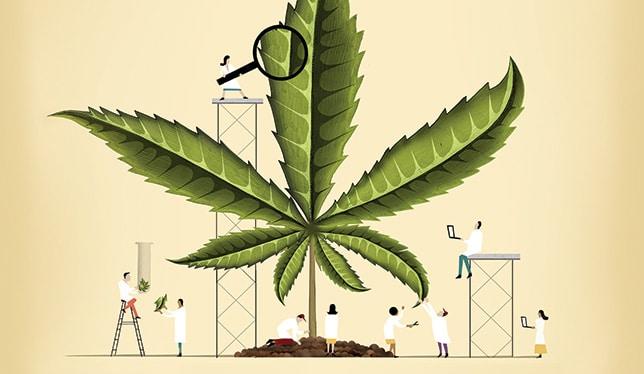 Universidades de EE.UU. ofrecen cursos sobre cannabis y su industria