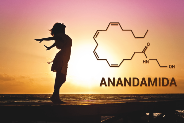 Anandamida: La molécula de la maravilla