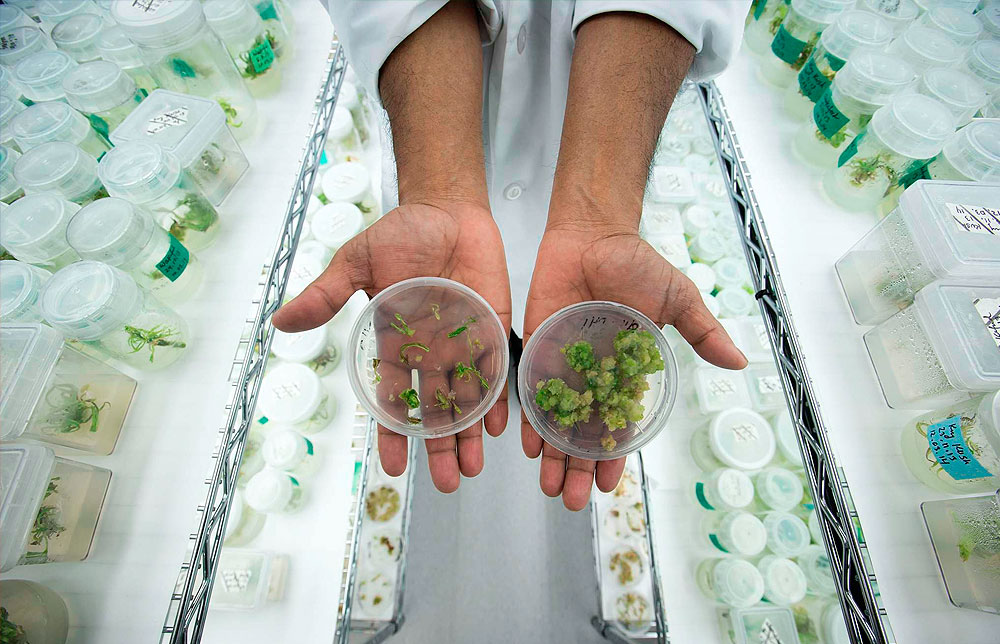 Chile: Primer ensayo clínico de cannabis en America Latina