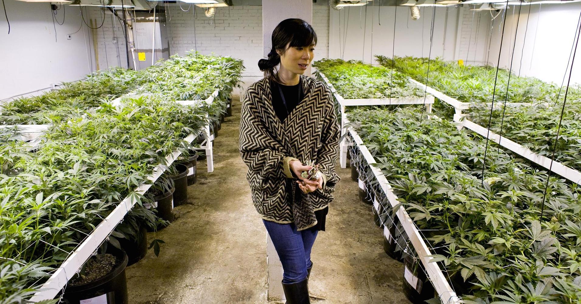 La industria del cannabis crea más de 150.000 empleos en Canadá