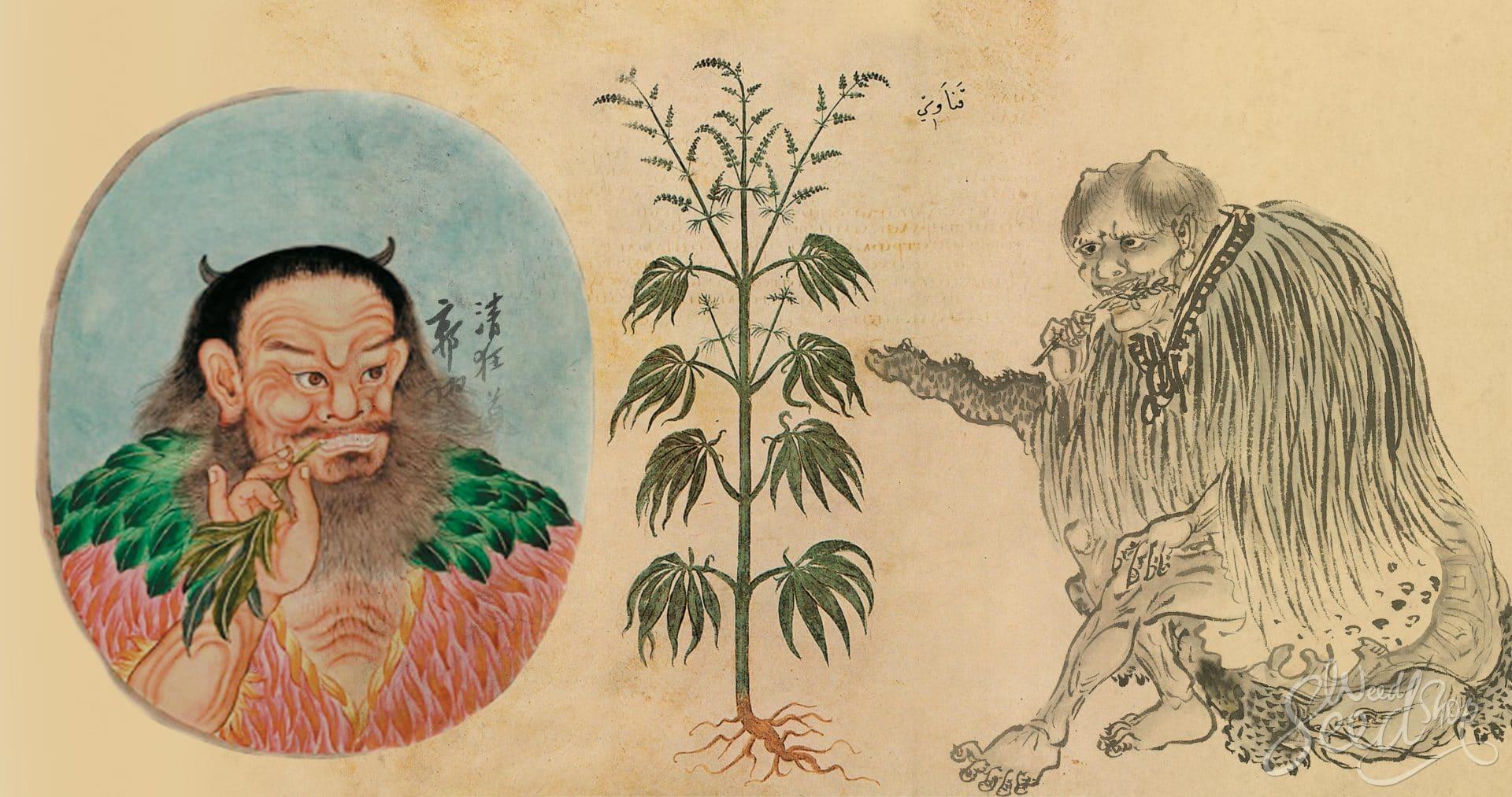 La historia de la agricultura del cannabis