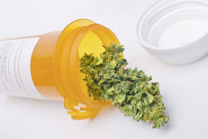Estudio: Cannabis Alto En THC Redujo Dolor Crónico En Pacientes Con Fibromialgia