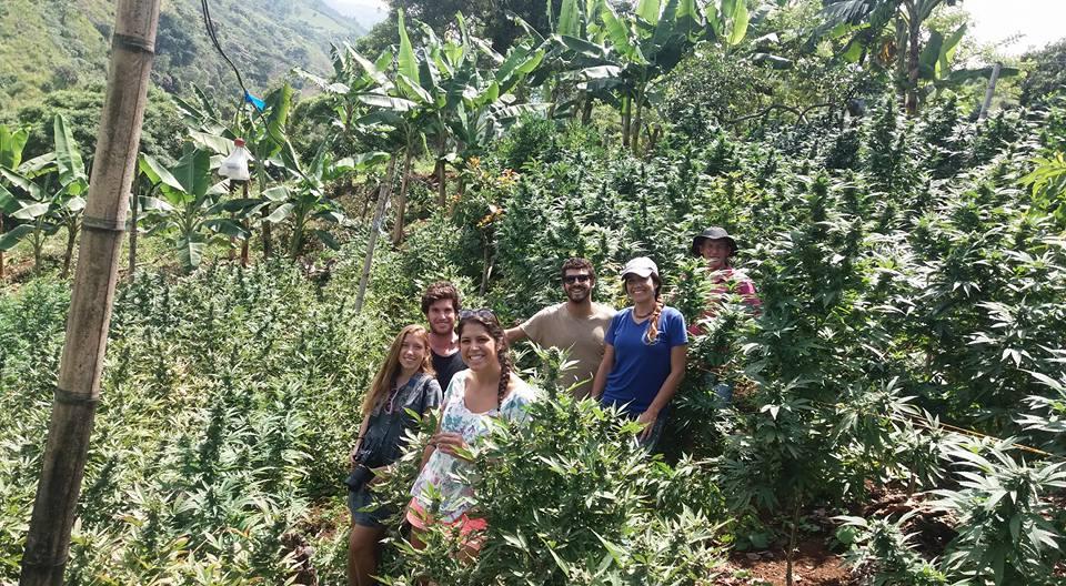 Cannabis Tour, el viaje que promueve la paz social y el desarrollo