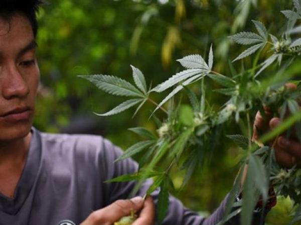 Nueva York despenaliza la marihuana