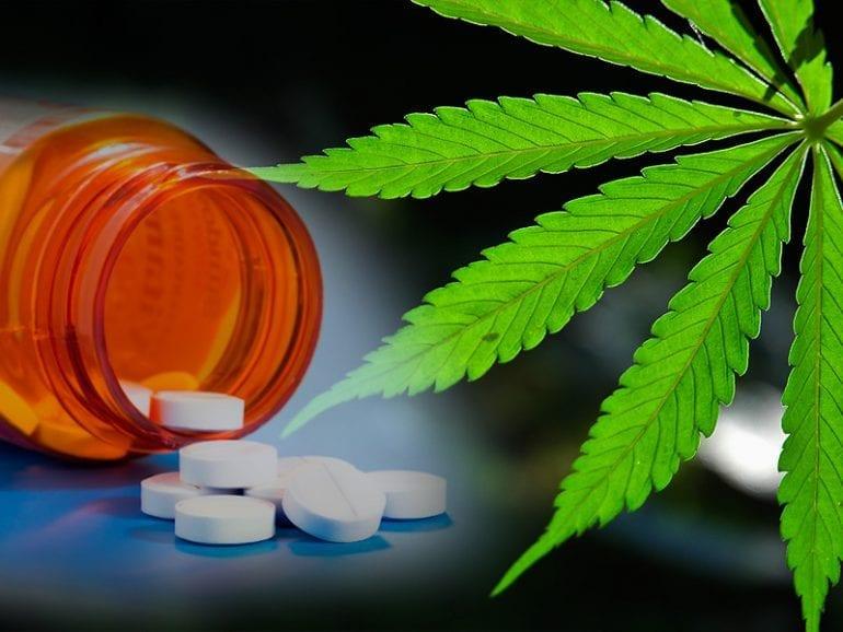 Un estudio dice que legalizar el cannabis reduce la mortalidad por opioides