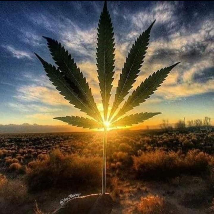 Efecto séquito: la suma de todos los cannabinoides