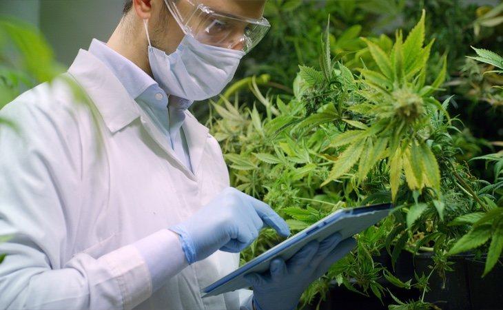 Estos son todos los intereses económicos que esconde la legalización de la marihuana