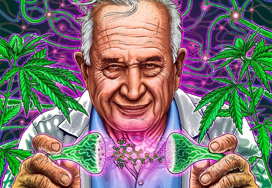 Crean variedad del cannabis que funciona como un esteroide