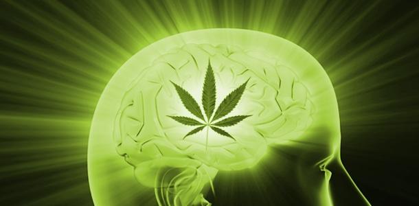 El extracto de cannabis funcionaría para combatir la adicción por marihuana