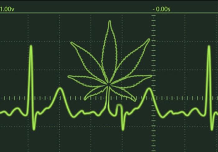 Para científicos, el consumo crónico de cannabis mejora la función cardíaca