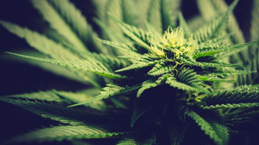La postura de la ciencia sobre el cannabis: en qué enfermedades puede ser realmente útil