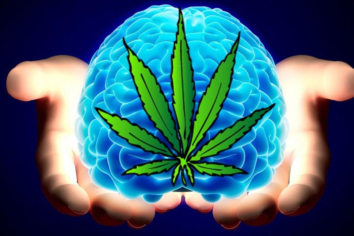 Estudio en gemelos demuestra que fumar cannabis no disminuye la inteligencia