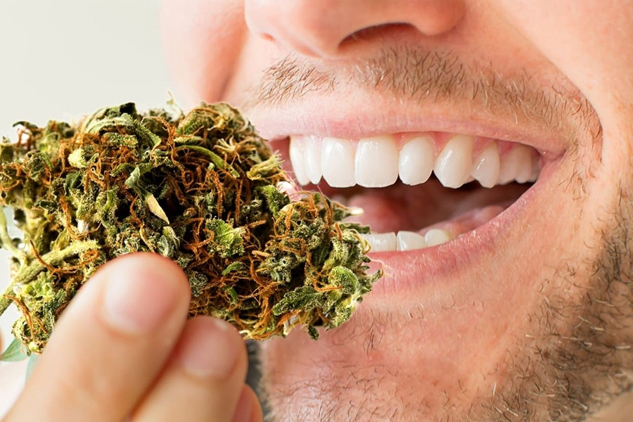 Cannabinoides como alternativa a antibióticos para reducir la placa dental