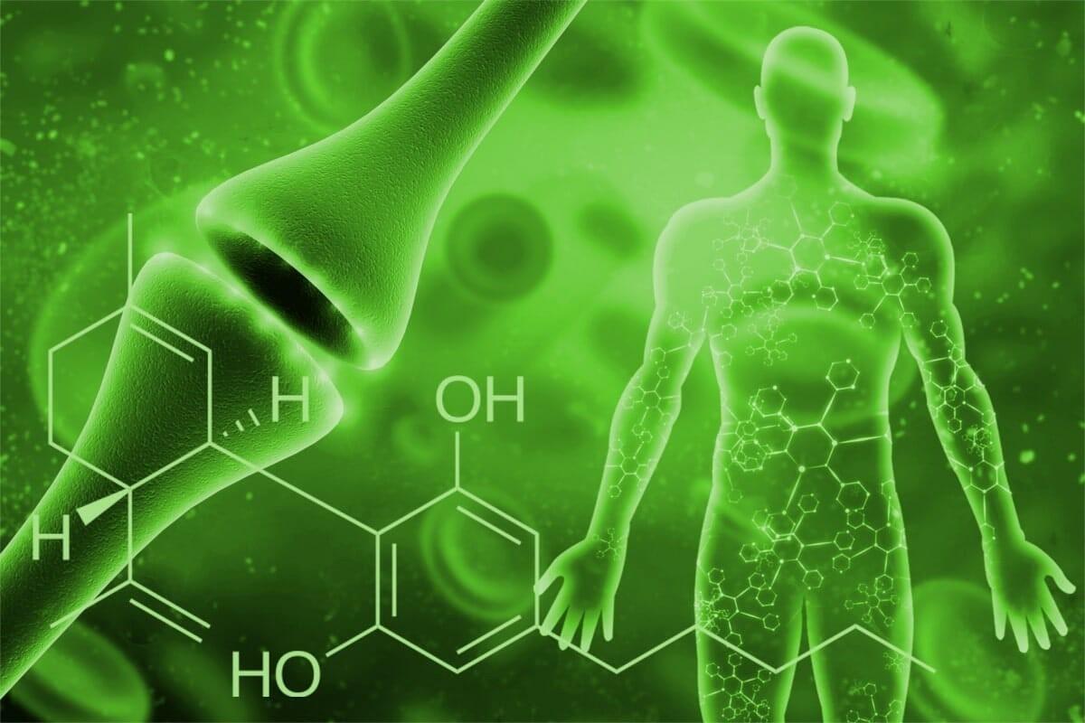 Estimular el sistema endocanabinoide sin cannabis