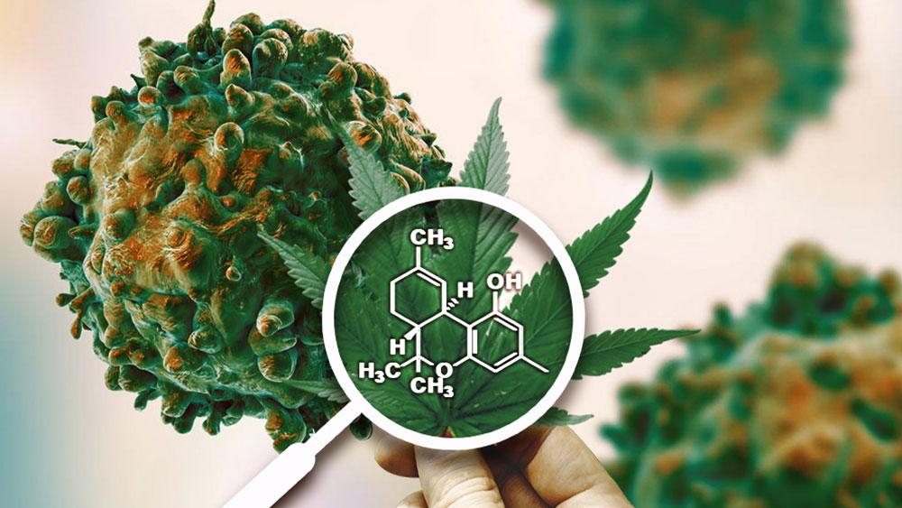 100 estudios sobre el cannabis y la cura del cáncer