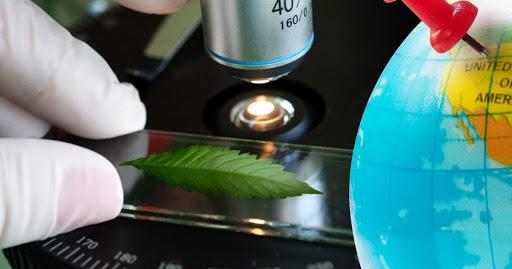 Universidades en el mundo y sus proyectos con cannabis