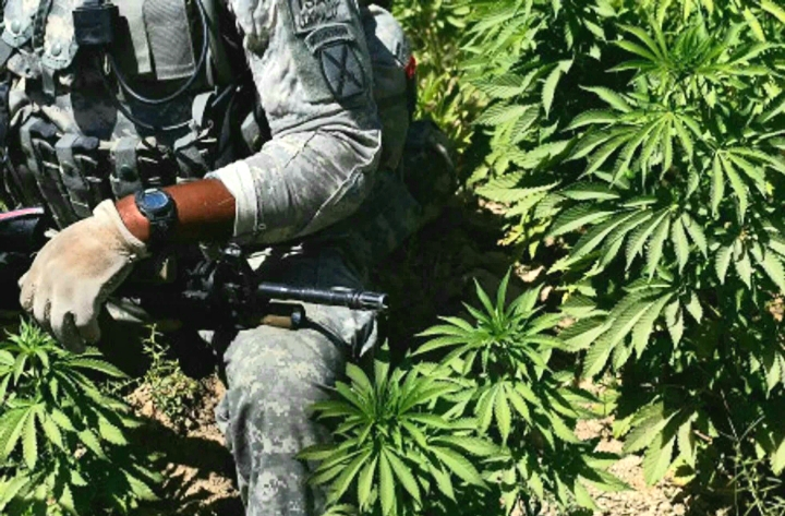 El cannabis reduce la angustia postraumática