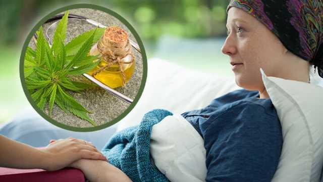 Incluir CBD en quimioterapia puede ser beneficioso para atacar el cáncer