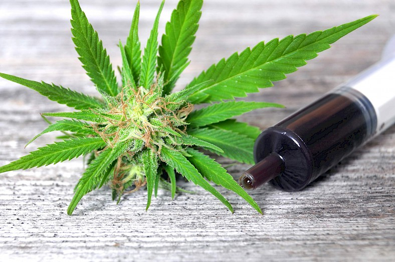 Cannabis Medicinal: No hay dosis letal