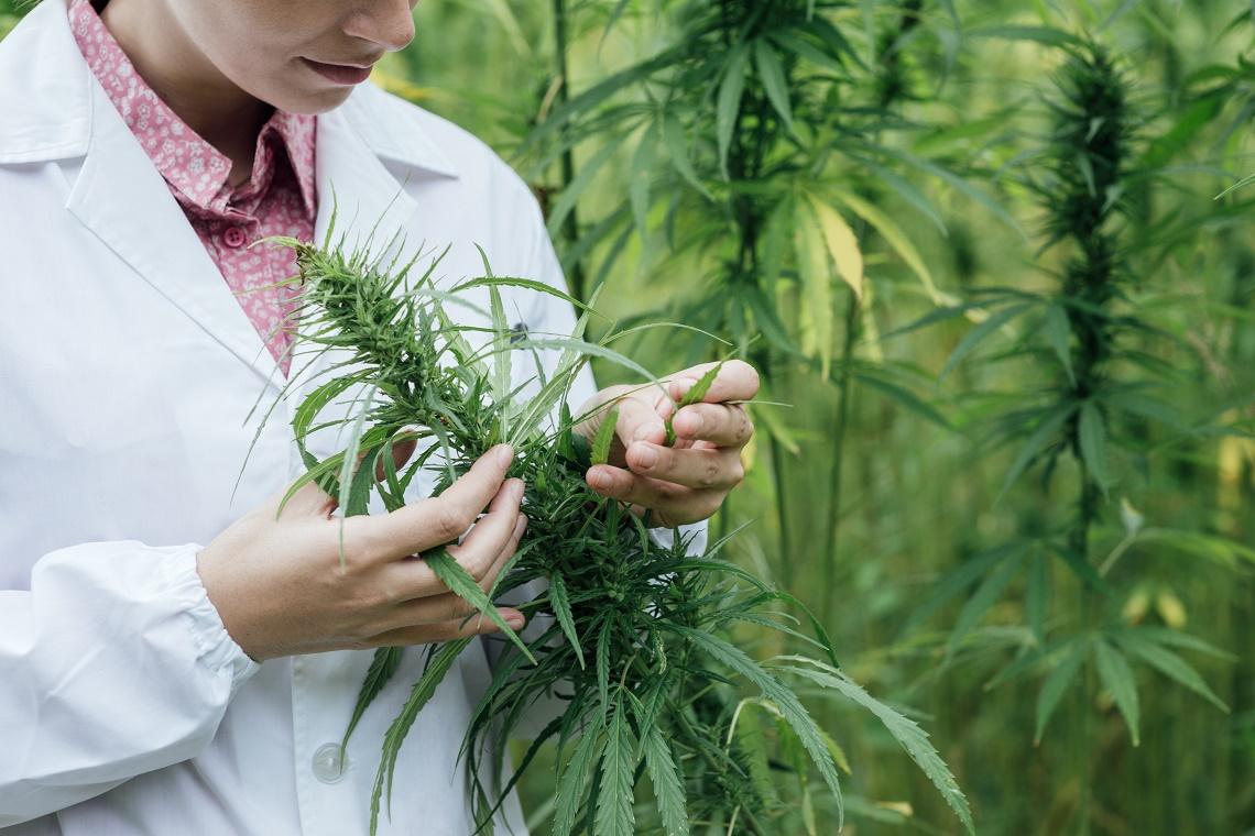 45 dolencias que se pueden tratar con cannabis