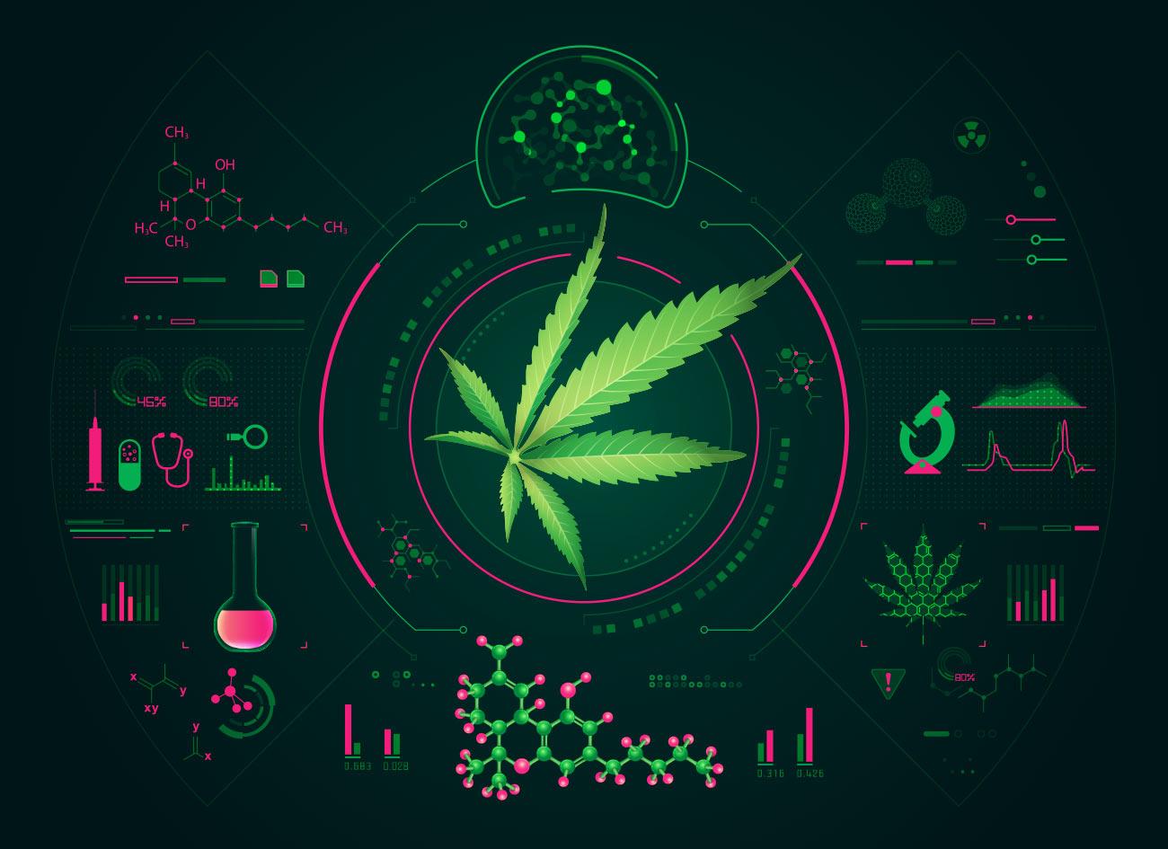 Cannabis podría ayudar con los problemas de circulación sanguinea y del corazón