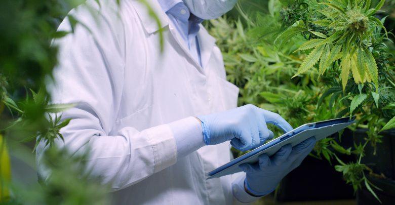 2020: las mejores investigaciones sobre cannabis