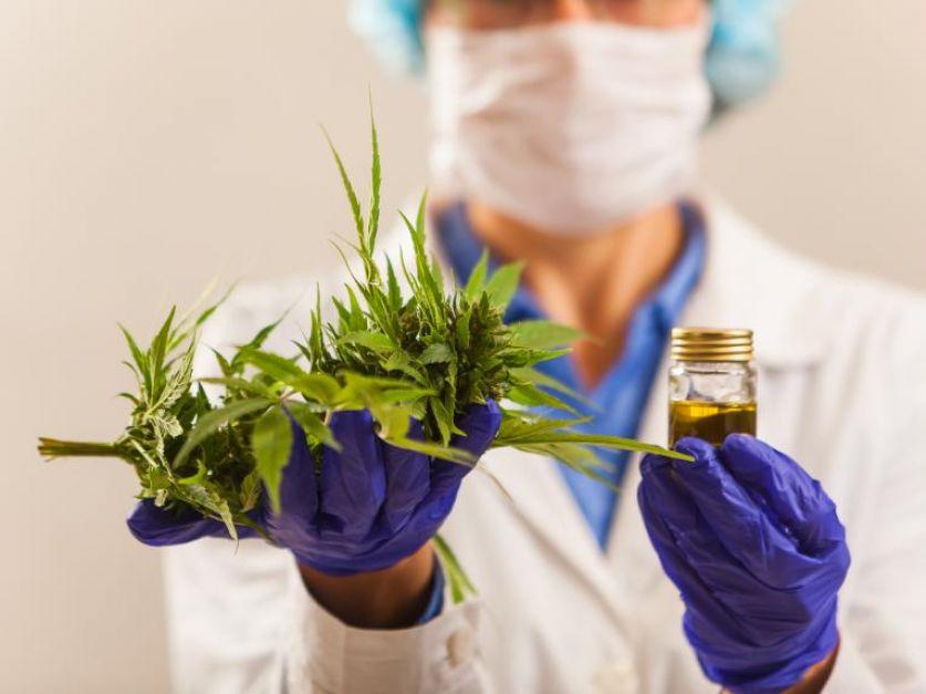 Componente del cannabis ayuda a pacientes graves de Covid a superar la enfermedad